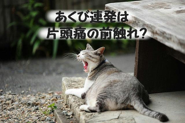 あくびする猫ちゃん