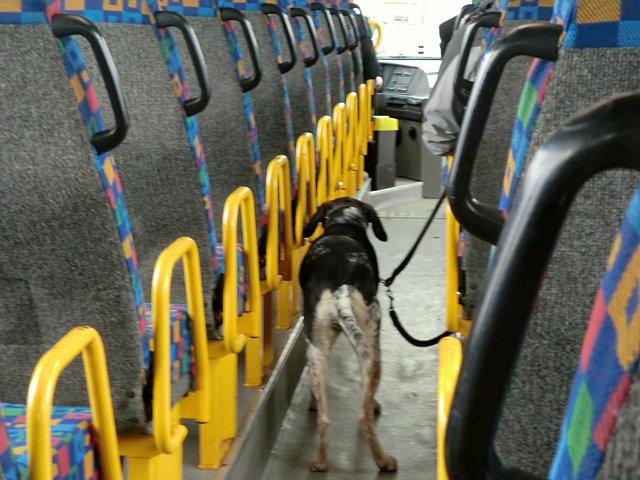 バスの中のワンちゃん