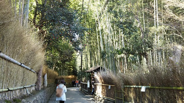 嵐山竹林の道